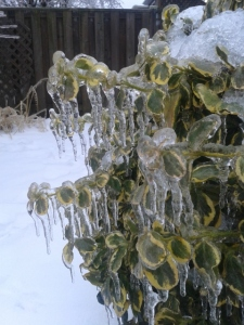 Ice covered every inch of every plant.
