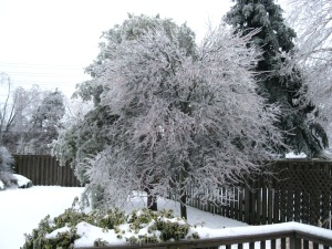 Our maple tree was completely covered in ice and majorly drooping.