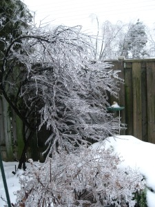 This tree normally stands vertically, but the ice was so heavy it swayed to the side. Crazy, but beautiful.