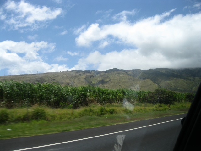 The drive to Kaanapali.  On the left hand side, you can see the windmills going up the mountain.