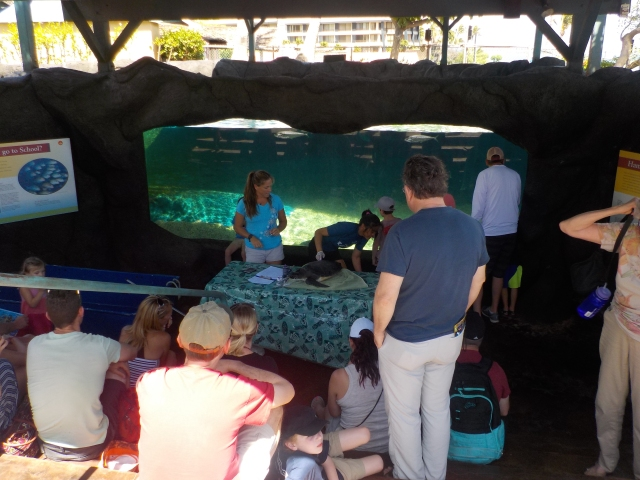 We were lucky enough to go to the aquarium on the day when the turtles were being weighed and checked.